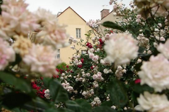 Прага Францисканский Сад